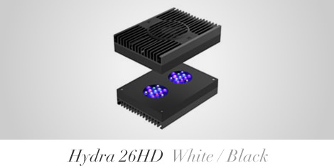 hydra26